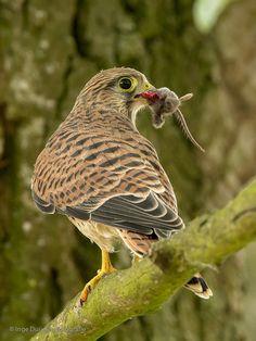 Vroege Vogels: Takkeling