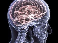 El cerebro. El gran desconocido de nuestra cabeza