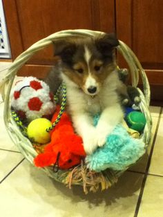 My baby girl. Nothing cuter than a puppy in a basket hehe