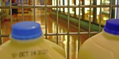 DairyGood.org   Donating to a Food Bank This Holiday? Here's How to Give Milk
