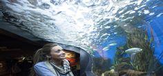 Aquarium Nausicaa : Centre National de la Mer - http://www.activexplore.com/activity/aquarium-nausicaa-centre-national-de-la-mer/