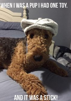 Aosom Dog Trailer And Their Benefits Airedale Terrier, Welsh Terrier, Wire Fox Terrier, Fox Terriers, Pet Dogs, Dogs And Puppies, Dog Cat, Doggies, Baby Dogs