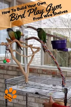 Two easy ways you can learn how to build your own bird play gym to keep your feathered friends happy without breaking the bank. Bird Play Gym, Parrot Play Stand, Parakeet Care, Diy Bird Toys, Homemade Bird Toys, Parrot Perch, Parrot Bird, Pet Bird Cage, Bird Stand