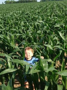 Future Farmer - Corn Felfie