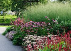 Sedum autumn joy...great when combined with purple coneflower, salvia and astilbe