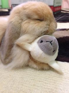 cute sleepy bunny                                                                                                                                                                                 More