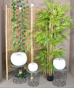 Growing Bamboo - Ιδέα διακόσμησης με μπαμπού στοιχεία Plants, Plant, Planets