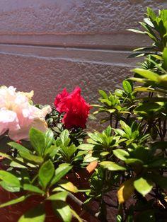 Las flores de la mamá, un regalo de Dios