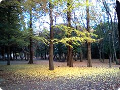 designjoonos: 砧公園 키누다 공원
