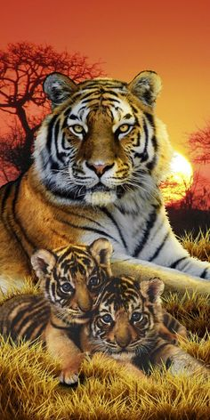 Get this endanger Bengal tiger sunset velour towel made from cotton only here at The Wildlife Kingdom of Towels & T-Shirts. Animals And Pets, Baby Animals, Cute Animals, Tiger Pictures, Animal Pictures, Beautiful Cats, Animals Beautiful, Tiger Artwork, Tiger Painting