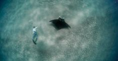 National Geographic Photography, Manta Ray, Florida Beaches, South Florida, Location History, Animals And Pets, Pets