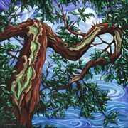 Sechelt Arbutus III - oil painting by Julie Johnston