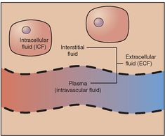 Major fluid compartments. Intracellular fluid (ICF) is fluid within cells. Extracellular fluid (ECF) is fluid outside of cells. The ECF includes interstitial fluid surrounding the cells, and plasma, the fluid component of blood. (In addition, specialized ECF includes synovial fluid, CSF, aqueous fluid in the eye, and some specialized GI secretions.) Fluid continually moves between the major compartments.