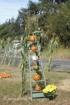 Pumpkins on old ladder