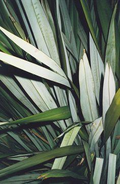 Filatures Maupetit. greenery, decor, minimal, minimalist
