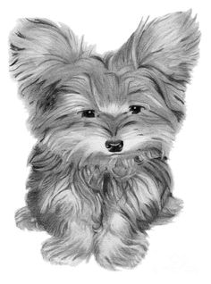 Cute Yorkie Dog Art Digital Art  - Cute Yorkie Dog Art Fine Art Print