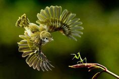 Bird vs. Praying Mantis.