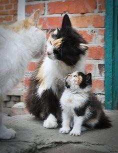 Kiss mamma goodbye
