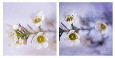 by Elisabeth Perotin photography Floral Photography, Artistic Photography, Macro Photography, Japanese Culture, Bokeh, Flower Prints, Wall Art Prints, Floral Design, Pastel