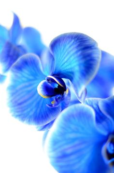 Blue orchids, nice idea for a tat.