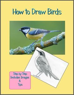 How to Draw Birds! Awesome resource!