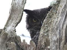 Peaking Out by Angie Vogel
