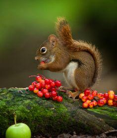 beautiful-wildlife:  Green hillbyAndre Villeneuve