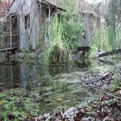 The essence of Ricky and Jasper's shanty within the bayou.