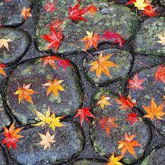 «¡Bienvenido el otoño! #otoño #automn #automne #hojas #leaves #feuilles…