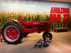 You like tractors? I sure do! The @Indiana State Museum & Historic Sites has one. #BigDawgsTour