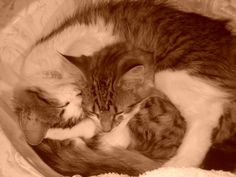 Maine coon and tabby sleeping in the sink :)
