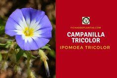 Dandelion, Flowers, Plants, About Plants, Climber Plants, Medicinal Plants, Flower Seeds, Growing Up, Dandelions