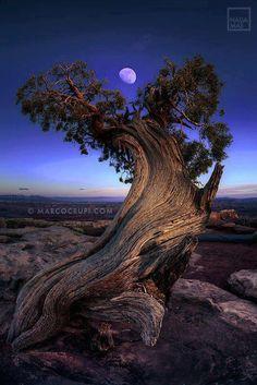 Desert moon.