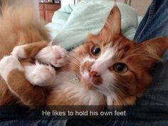 He likes to hold his own feet (Funny Animal Pictures) - #cat #feet #hold