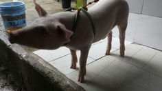 Oink Oink Wildlife, Dogs, Animals, Animales, Animaux, Doggies, Animais, Dog, Animal