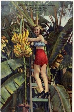 bananas in sunken gardens ~ st petersburg ~ florida