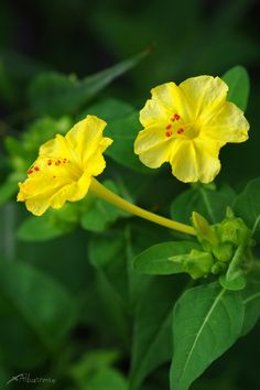 IvyRio Little Flowers, All Flowers, Growing Flowers, Flowers Nature, Exotic Flowers, Yellow Flowers, Planting Flowers, Flower Words, Flower Images
