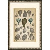 Found it at Joss & Main - Shells in the Sea I Framed Giclee Print