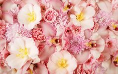 Earth Flower  Peony Pink Flower Nature Orchid Wallpaper