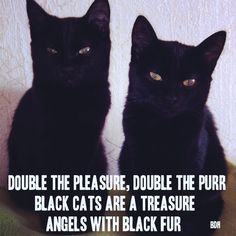 Black cats are so beautiful. They are a lot of fun too. Yes double the trouble. Angels that is debatable. I will always love them. Theincensewoman