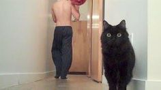 #Funny Cat's Reaction To Balloon - #cat