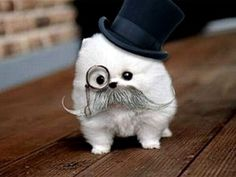 Cute puppy with monocle