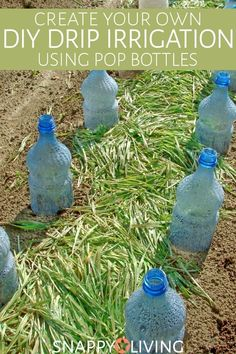 If you have a drill and some old 2-liter soda bottles, you can also make your own DIY drip irrigation system. It's cheaper and easier than buying a system and getting it installed. And it works very well.