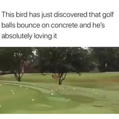 Bird Plays with Golf Ball - Tier - Humor Funny Funny Animal Memes, Funny Animal Videos, Cute Funny Animals, Funny Animal Pictures, Cute Baby Animals, Funny Cute, Funny Memes, Hilarious, Funny Videos