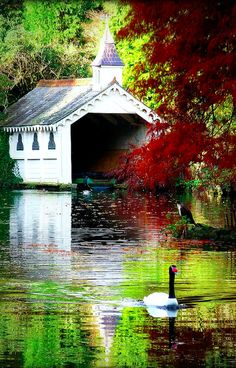 The beautiful victorian lake at Trevarno estate in Cornwall, England • photo: Ebony~Cat on Flickr