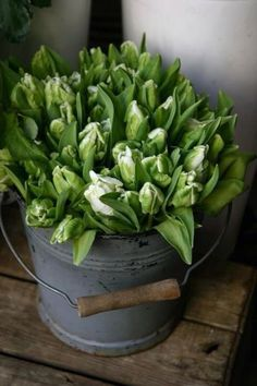 Tulipani per Tutti