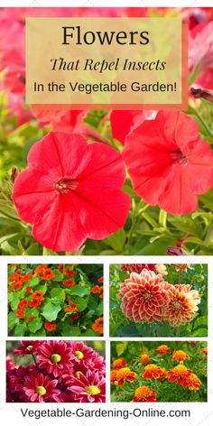 companion planting flowers in vegetable garden