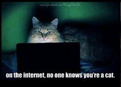 Surfing the net cat - Cat memes - kitty cat humor funny joke gato chat captions feline laugh photo Funny Cats, Funny Animals, Cute Animals, Animal Funnies, Animal Memes, Animal Humour, Talking Animals, Crazy Animals, Animal Quotes