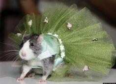 Rat in a little tutu.