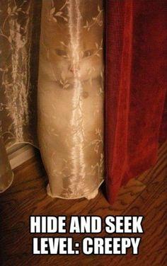 Kitty Cat Hide and Seek Level Creepy ---- hilarious jokes funny pictures walmart fails meme humor:
